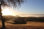 paso robles, wineries, wine, hearst castle, bed and breakfast, belvino viaggio, wildlife, view, sunset, sunrise